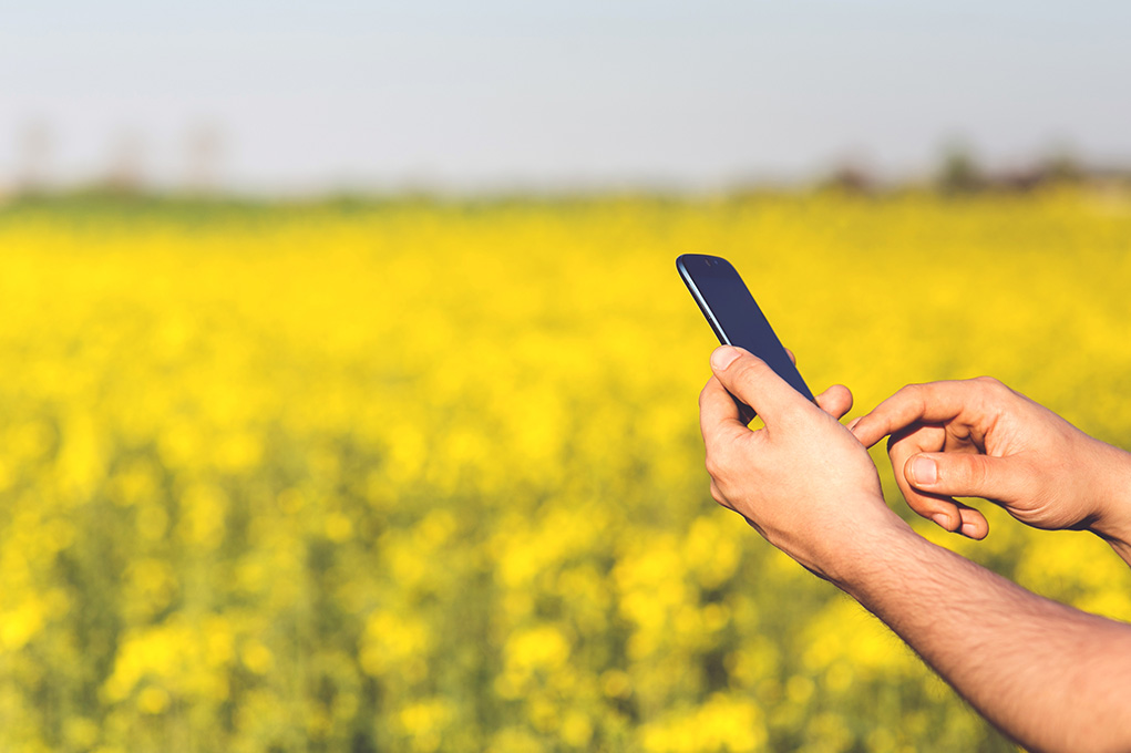 An image of a white male's arm using his Mobile Device in a field filled with yellow flowers. His mobile device is black in color.